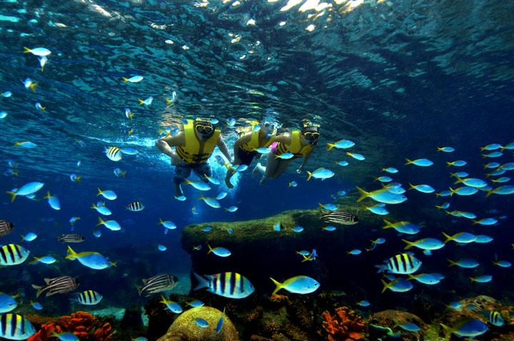 ตื่นตาตื่นใจกับปลามากมายจากท้องทะเลเขตร้อนที่นซ่อนหาอยู่ตาม Rainbow Reef ที่ Adventure Cove Waterpark