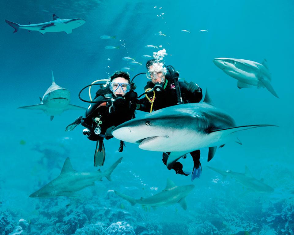 ประสบการณ์อันน่าตื่นเต้นกับการว่ายน้ำเคียงข้างฉลามกว่า 100 ตัวจาก 12 สายพันธุ์ที่ Shark Seas Habitat, S.E.A