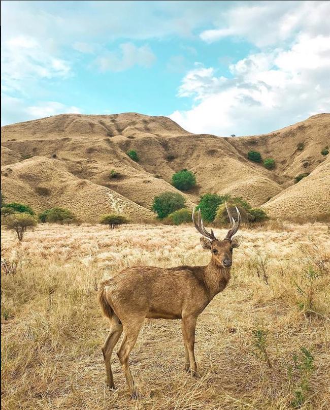 Komodo National Park