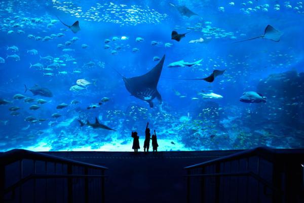 KV_S.E.A.-Aquarium_reference